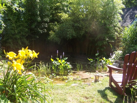 Our natural swimming pool--a work in progress.